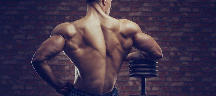 stéroide musculation